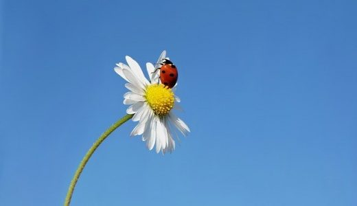 Q:「虫が目の前でフッと消えた…!レイキやアチューンメントと関係ありますか?